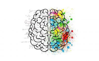 Hersensystemen en de cruciale rol van de partner